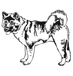 decorative standing portrait of american akita vector image vector image