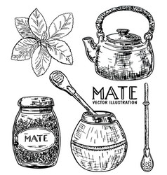 ink hand drawn sketch style yerba mate tea vector image vector image