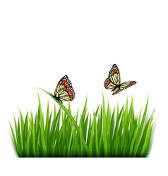 Nature grass butterflies background vector image vector image