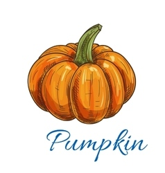 Orange autumn pumpkin vegetable sketch vector