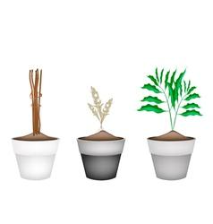 Fresh cardamon plants in ceramic flower pots vector