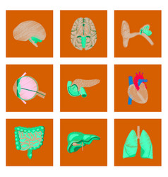 Assembly of flat shading style icon human organs vector