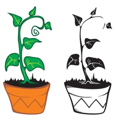 Plant in pot vector image vector image