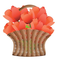 Basket of tulips vector image vector image