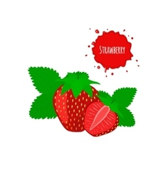 Juicy strawberry with leaves isolated on white vector image