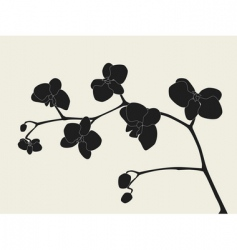 Orchid branch silhouette vector