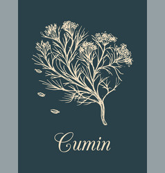 Cumin with seeds culinary vector