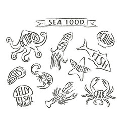 grunge contours of sea animals with names vector image
