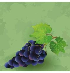 Vintage background with black grape vector image