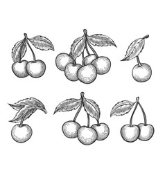 cherry sketch icons set vector image vector image
