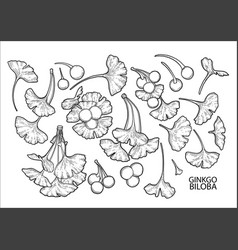 Graphic ginkgo biloba branches vector