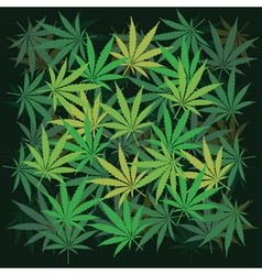 Cannabis Leaves vector image