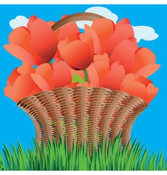 Basket of tulips2 vector image