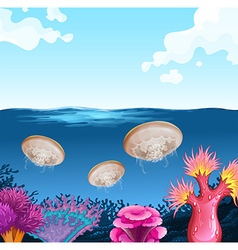 Jellyfish swimming in the ocean vector