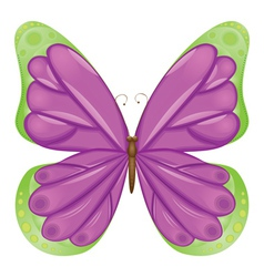 Beautiful butterfly vector