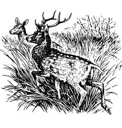 deer cervus nippon vector image vector image