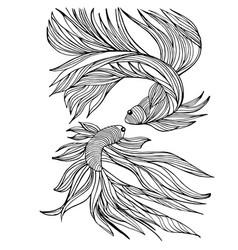 two small fishes yin-yang hand-drawn vector image vector image