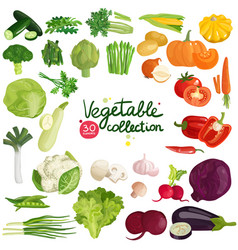vegetables and herbs collection vector image