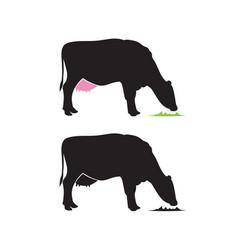 Emblem of a dairy cow munching grass vector