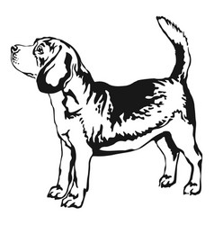 decorative standing portrait of beagle vector image vector image