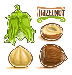 Set of hazelnut nuts vector