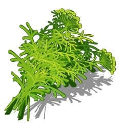 Bunch of dill on white background food concept vector