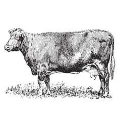 Dual purpose cow vintage vector
