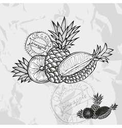 Hand drawn decorative pineapple fruits vector