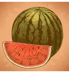 Engraving watermelon and slice retro vector