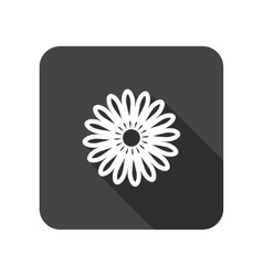 Camomile flower icons floral symbol rounded vector