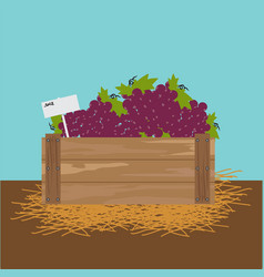 Grape in a wooden crate vector