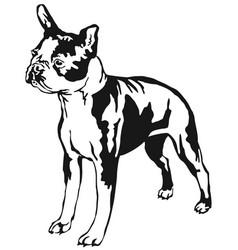 Decorative standing portrait of boston terrier vector