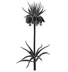 Imperial fritillaria vector