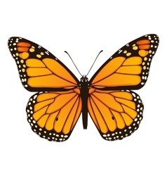 Monarch butterfly hand drawn vector