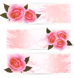 Pink roses banners vector