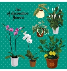 Set of potted plants with flowers vector