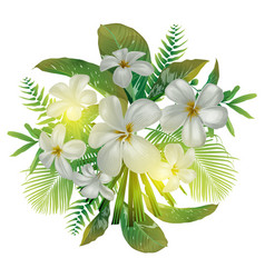 Plumeria flower bundle vector