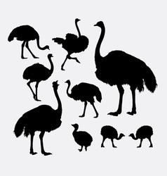 Ostrich bird poultry animal silhouette vector