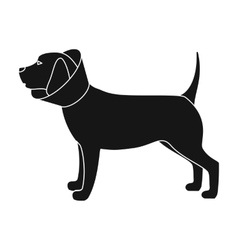 Dog with elizabethan collar icon in black style vector image vector image