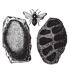 Mason bee and nest vintage vector
