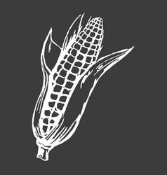 tasty ripe corn cob isolated white silhouette vector image