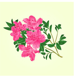 Twig pink rhododendron with flowers and leaves vector