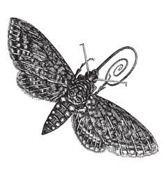 Vintage Hawk Moth Sketch vector image vector image
