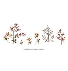 autumn leaf tree branches designer art different vector image