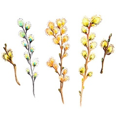Watercolor willow branch collection vector