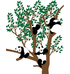 Panda on the tree vector