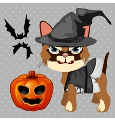 Angry cat with pumpkin and bats vector