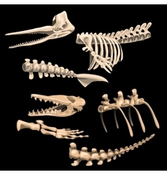 Bones and fragments skeletons of ancient fish vector