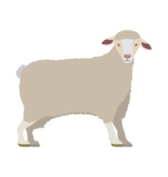 Cartoon funny of sheep posing vector