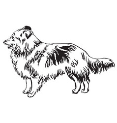 decorative standing portrait of dog sheltie vector image vector image